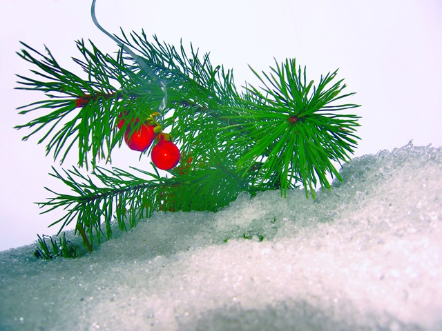 decoration of the winter